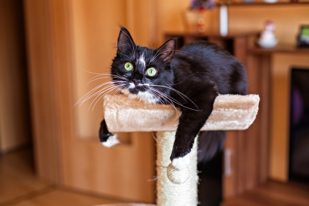 Photo pour Beautiful cat laying in hammock on the scratching post - image libre de droit