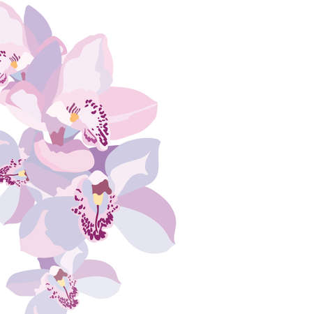 Vector Orchid flowers isolated