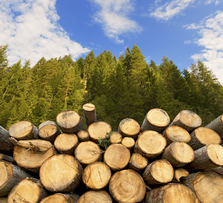 Photo pour Trunks of trees cut and stacked in the foreground, green forest in the background with blue sky and clouds - image libre de droit