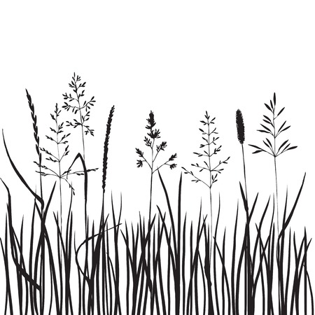black grass silhouettes, hand drawn wild cereals, meadow wild plants, vector illustration