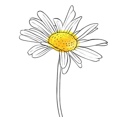 Ilustración de vector drawing flower of daisy - Imagen libre de derechos