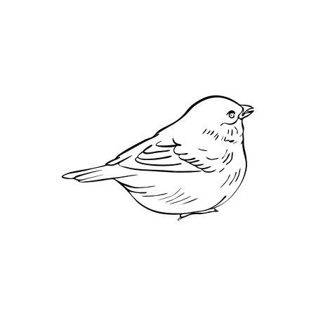 Vector Line Drawing Bird Sitting At Tree Branch Sketch Of