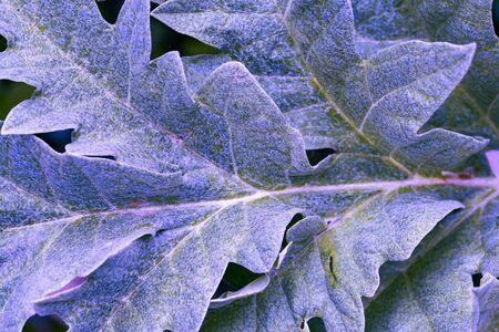 Foto de Background blue textured vibrant color leaf. Graphic ressource - Imagen libre de derechos