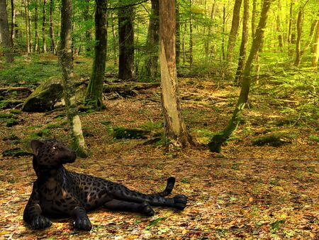 BLACK PANTHER - A beautiful black panther lies down in the deep forest too rest.