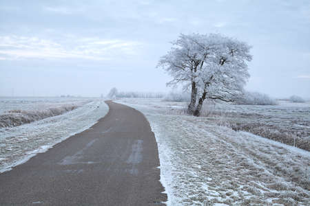 Photo pour tree by road during snowy winter morning, Netherlands - image libre de droit