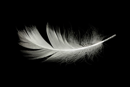 white feather against black