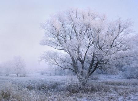 Photo pour winter evening in the forest - fairytale landscape - image libre de droit