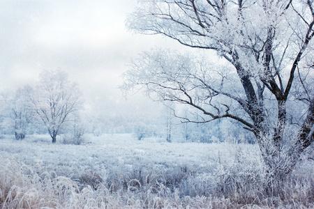 Photo pour winter evening landscape with falling snow  - image libre de droit