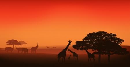 african wildlife editable illustration - savannah at sunset