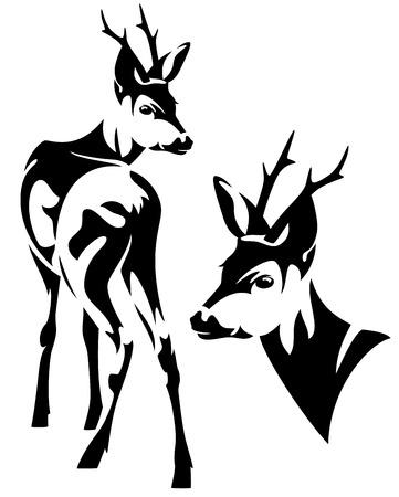 elegant roe deer  Capreolus capreolus  black and white vector outline - standing animal and head design