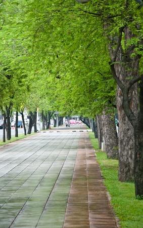 The Path along tamarind trees