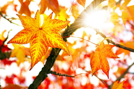 Photo pour Nature background of bright and colorful Fall leaves  - image libre de droit