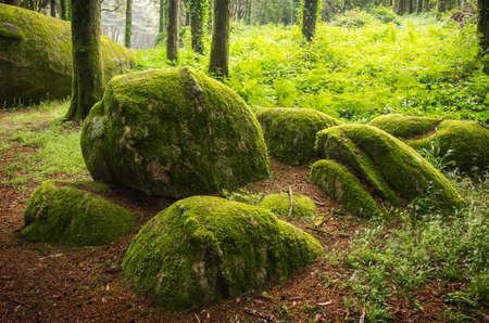 Landscape of natural forest in Sintra Hills, Portugal