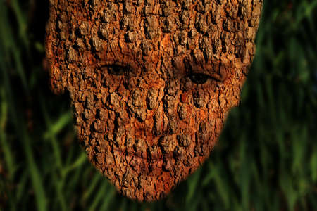 Tree Bark Boy Face Nature Conservation Symbolism