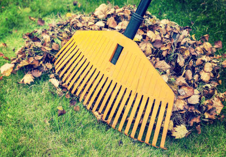 Photo pour Pile of fall leaves with rake on green lawn - image libre de droit