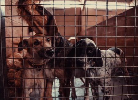 Foto de Dog in enclosed kennel, abandoned animals, abuse - Imagen libre de derechos