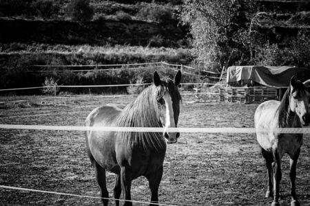 Horse quiet in park , animals and nature