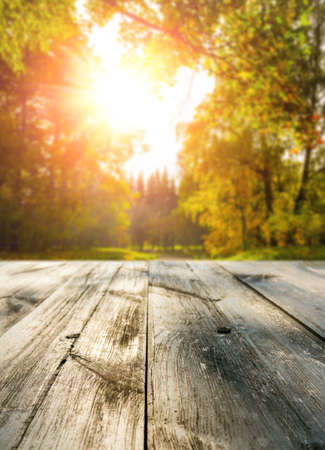 Photo for Wooden table in autumn forest at sunset - Royalty Free Image
