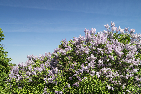 Landscape with colour lilac on background blue sky at solar day