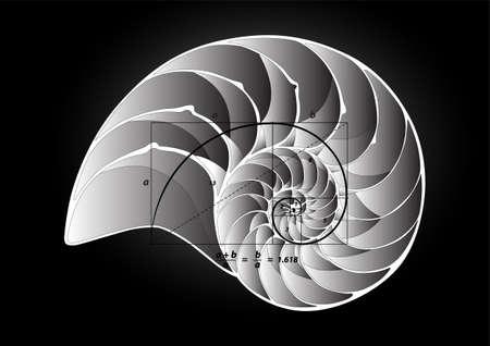 Illustration pour Golden section on shell - image libre de droit