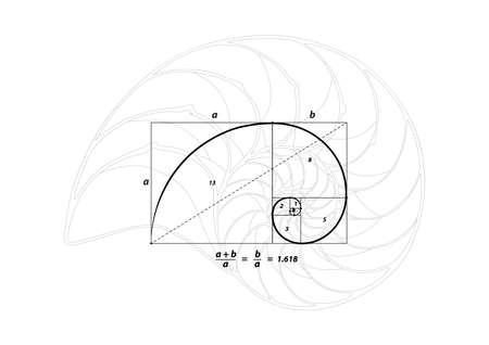 Illustration pour Golden section (ratio, divine proportion) and golden spiral on black and Shell line - image libre de droit