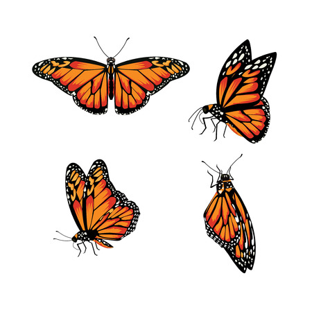 Illustration pour butterfly Monarch Butterfly, Danaus plexippus - image libre de droit