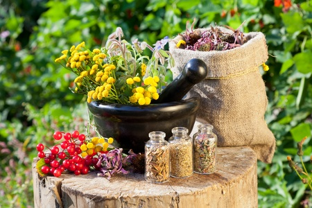 Photo pour healing herbs in mortar and in sack, herbal medicine - image libre de droit