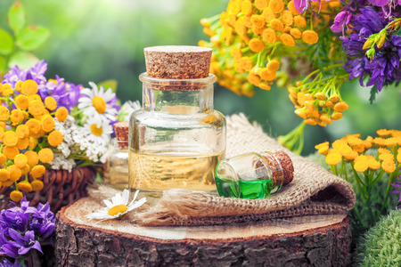 Photo pour Bottles of essential oil or potion, healing herbs and wildflowers. Herbal medicine. - image libre de droit