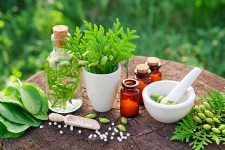 Bottles of homeopathic globules, Thuja occidentalis, Plantago major drugs and mortar. Homeopathy medicine.