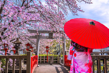 Photo pour Asian woman wearing japanese traditional kimono and cherry blossom in spring, Kyoto temple in Japan - image libre de droit