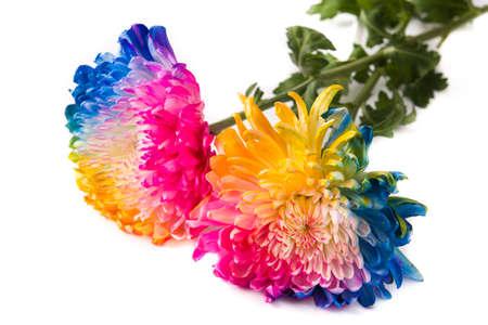 Foto de Multicolored flower isolated on white background - Imagen libre de derechos