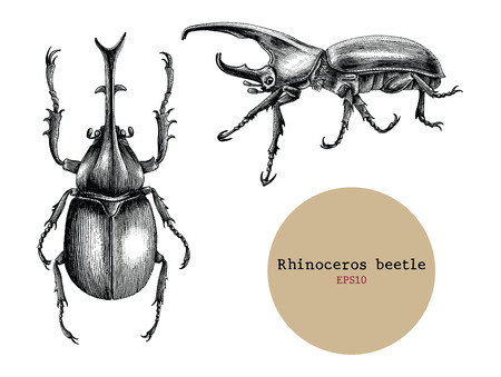 Illustration pour Rhinoceros beetle hand drawing vintage engraving illustration,Drawing design for tattoo - image libre de droit