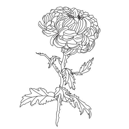 Illustration pour Elegant decorative chrysanthemum flower, design element. Floral branch. Floral decoration for vintage wedding invitations, greeting cards, banners. - image libre de droit
