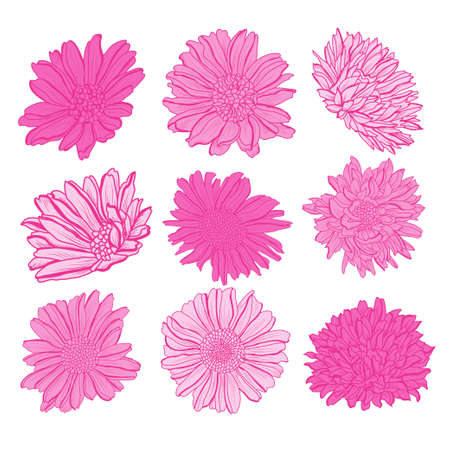 Illustration pour Decorative aster  flowers set, design elements. Can be used for cards, invitations, banners, posters, print design. Floral background in line art style - image libre de droit