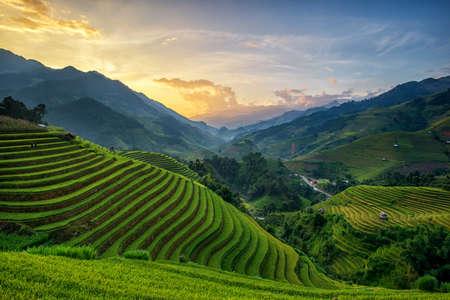 Rice fields on terrace in rainy season at Mu Cang Chai, Yen Bai, Vietnam. Rice fields prepare for transplant at Northwest Vietnam