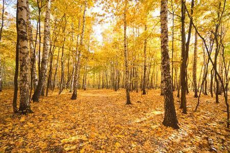 Photo pour Autumn in a forest. Wide angle landscape. - image libre de droit