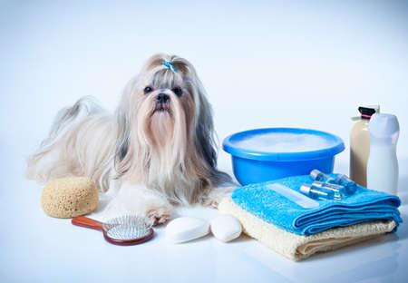 Photo pour Shih tzu dog washing concept. Portrait with comb, towels and soap. On white and blue background. - image libre de droit