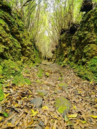 Bosque de Los Tilos - beautiful forest on La Palma, Canary Islands, Spain