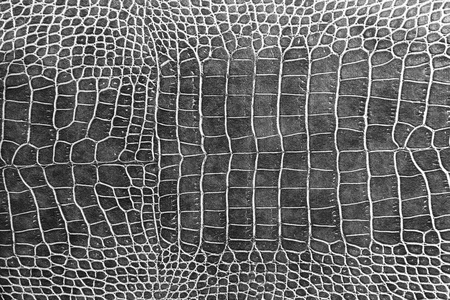 Black Crocodile Skin Texture As A Wallpaper Royalty Free