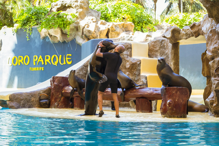 TENERIFE, SPAIN - JANUARY 15, 2013: Shows seals and sea lions in the pool, Loro parque, Puerto de la Cruz, Santa Cruz de Tenerife, Canary Islands, Spain