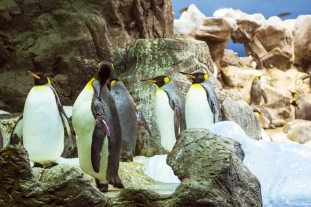 TENERIFE, SPAIN - JANUARY 15, 2013: Penguins on the artificial glacier in Loro Park Loro Parque, Puerto de la Cruz, Santa Cruz de Tenerife, Canary Islands, Spain