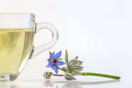 herbal tea  with flowers  borage