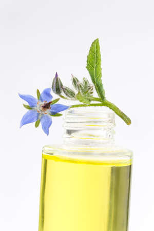 essential oil of natural  Borage