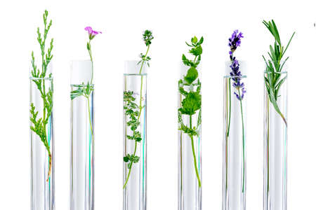 Photo pour research Concpt on plants, aromatic herbs and flowers in test tubes - image libre de droit