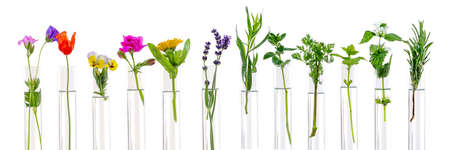 Photo for Flowers and plants in test tubes on white. The concept of biological research. - Royalty Free Image