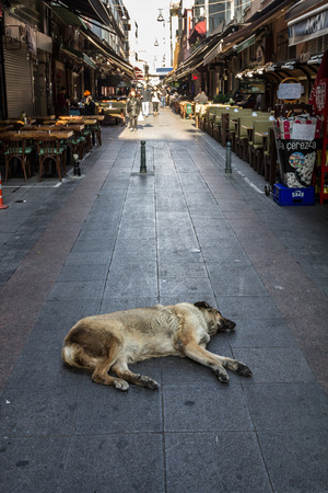 ISTANBUL, TURKEY - DECEMBER 27, 2015: Strau dog sleeping and having a nap in the middle of a pedestrian street of the Asian district of Kadikoy, in IstanbulPicture of a stray abadoned dog having a rest, sleeping in the middle of a pedestrian area, in th