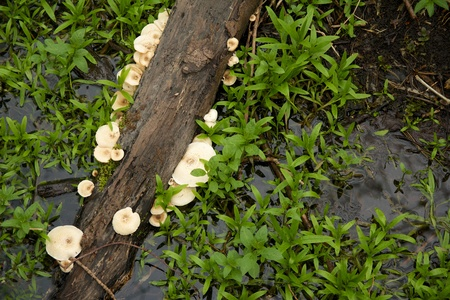 Dead branch in a swamp with mushrooms growing on it