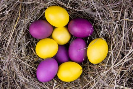 Photo pour Yellow and purple eggs in a nest top view. Concept easter. - image libre de droit