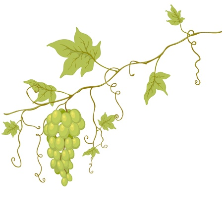 Green grapes with leaves isolated on white.