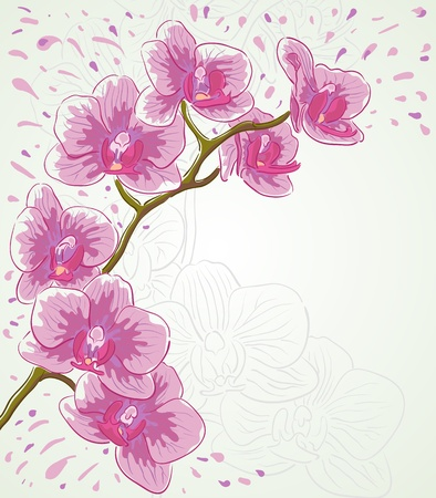 Vector greetings card for holiday with orchid flowers